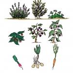 diversite-de-plantes-web